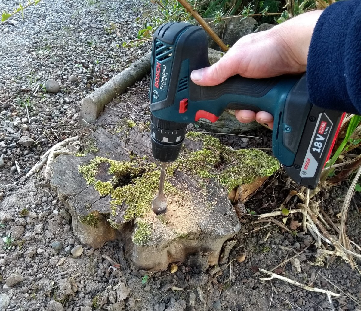 Drill holes in the stump.