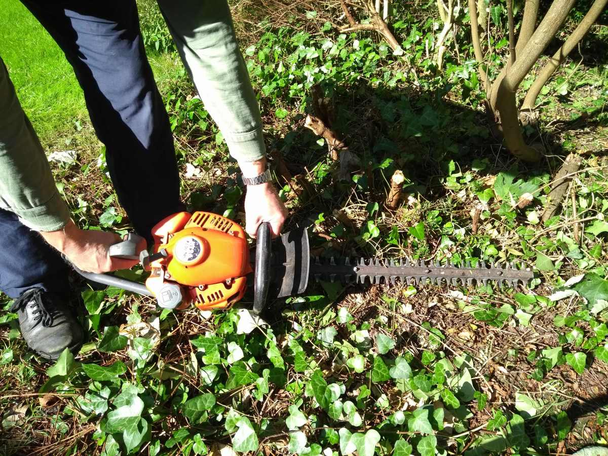 Clear any ground cover with a hedge trimmer, hand shears, string trimmer (strimmer) or brush cutter