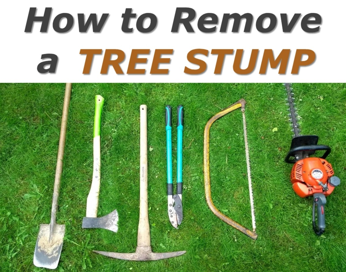 How to Remove a Tree Stump Easily