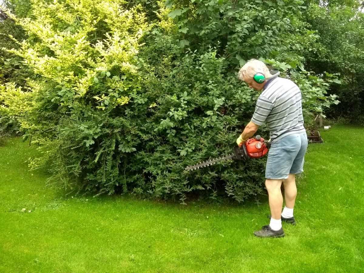 Remove surrounding vegetation