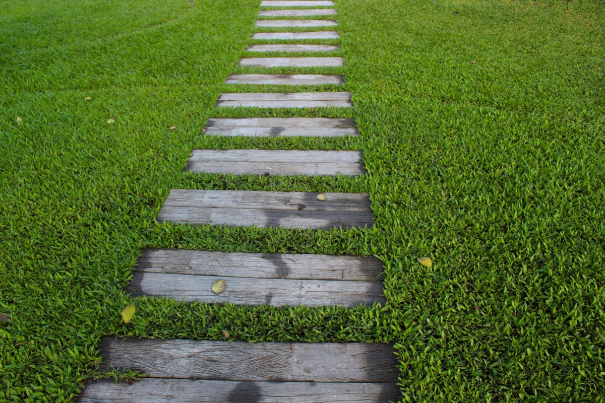 Characteristics of a Healthy Lawn