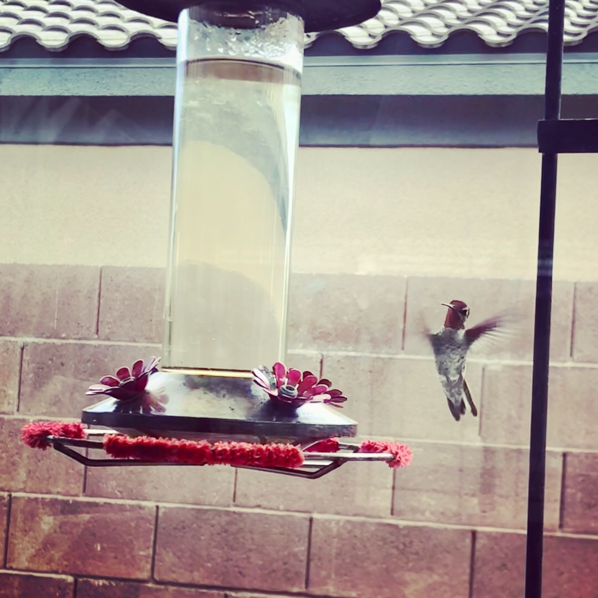 A hummingbird flying away after feeding.