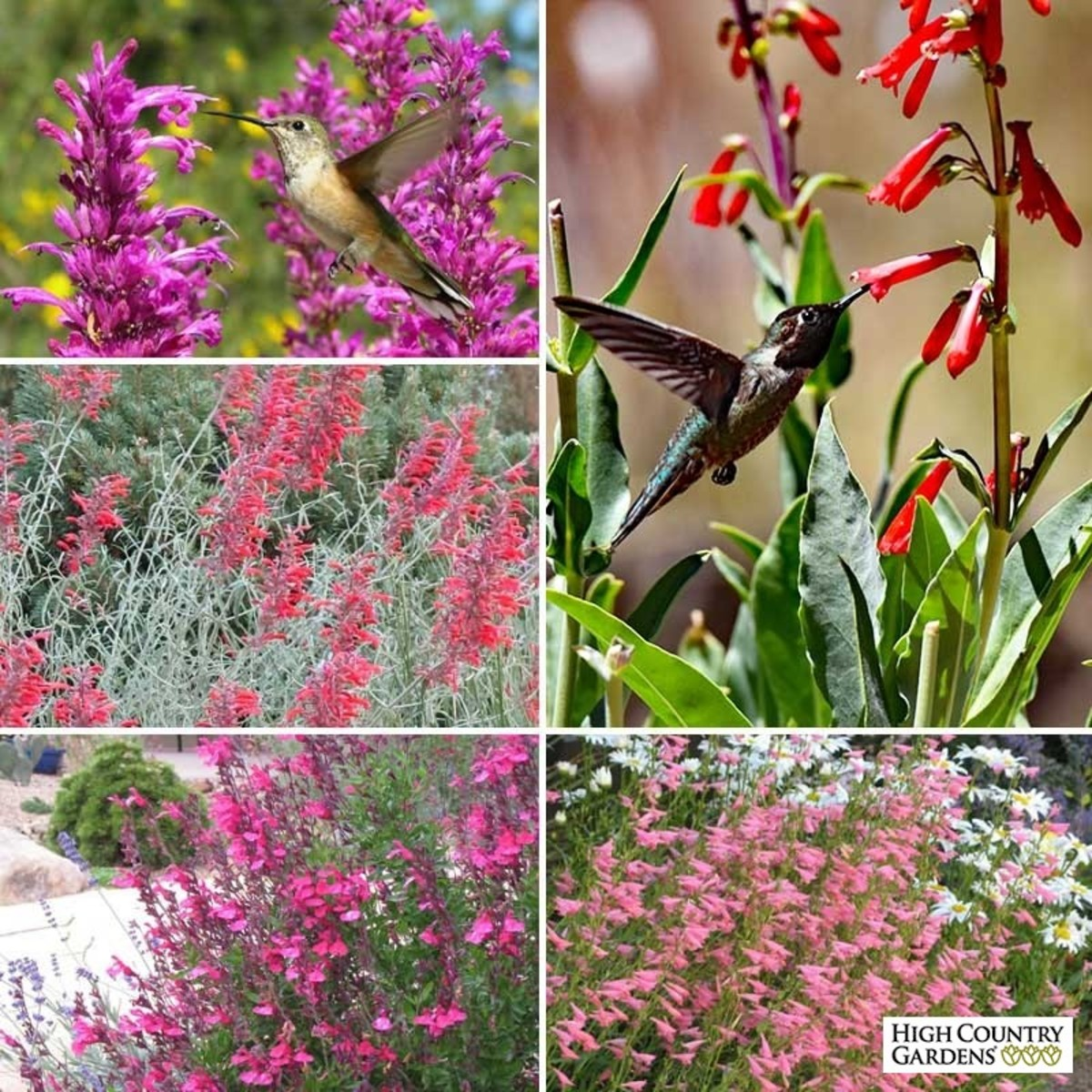 tips-how-to-attract-hummingbirds-easily