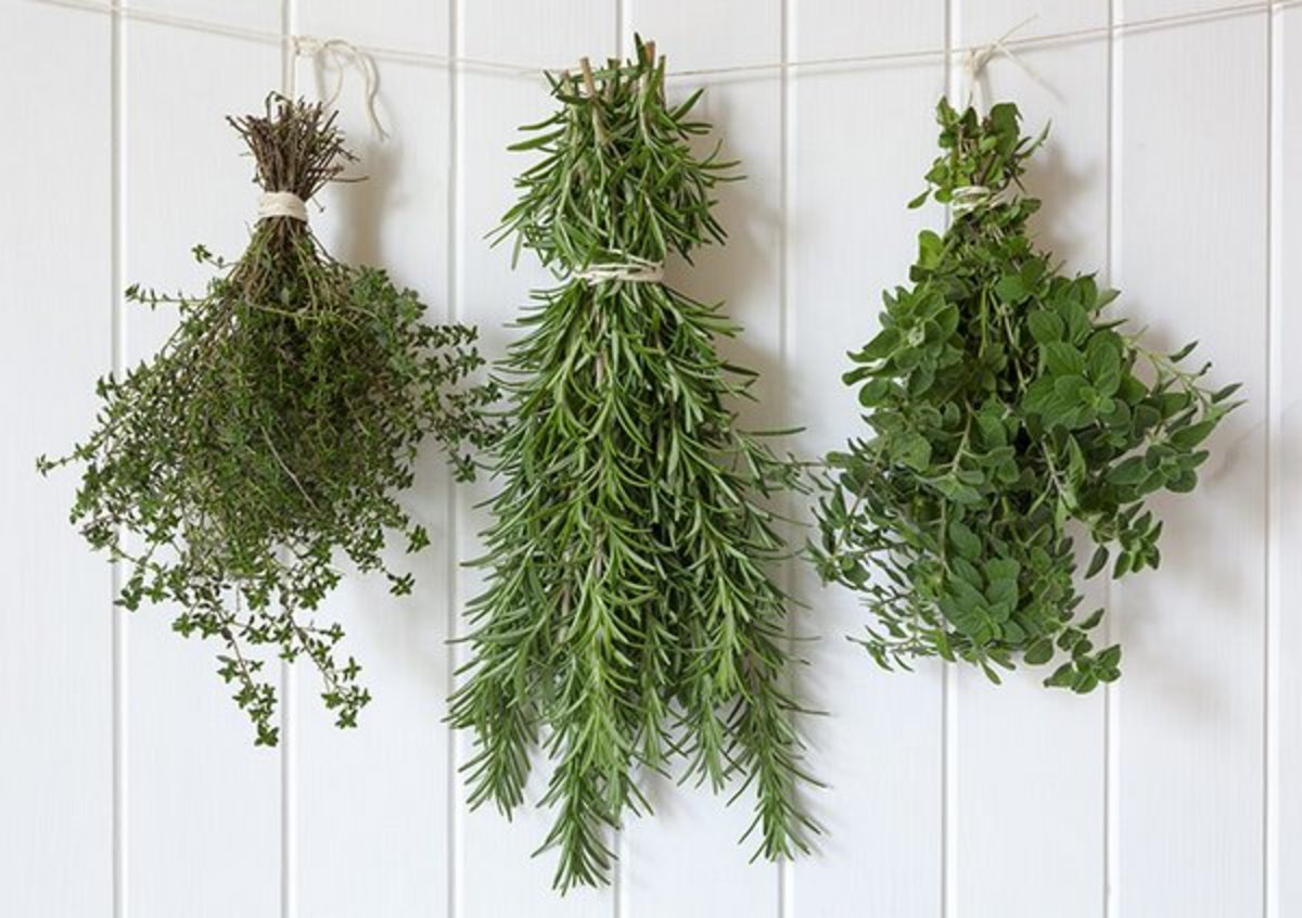Drying herbs using the air dry method.