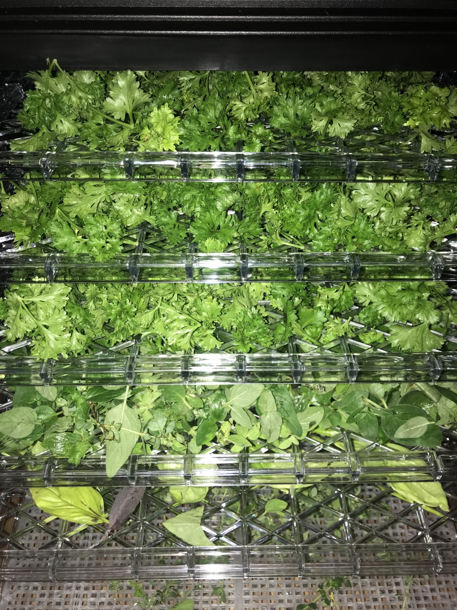 Herbs that are about to be dried in our Gourmia food dehydrator.