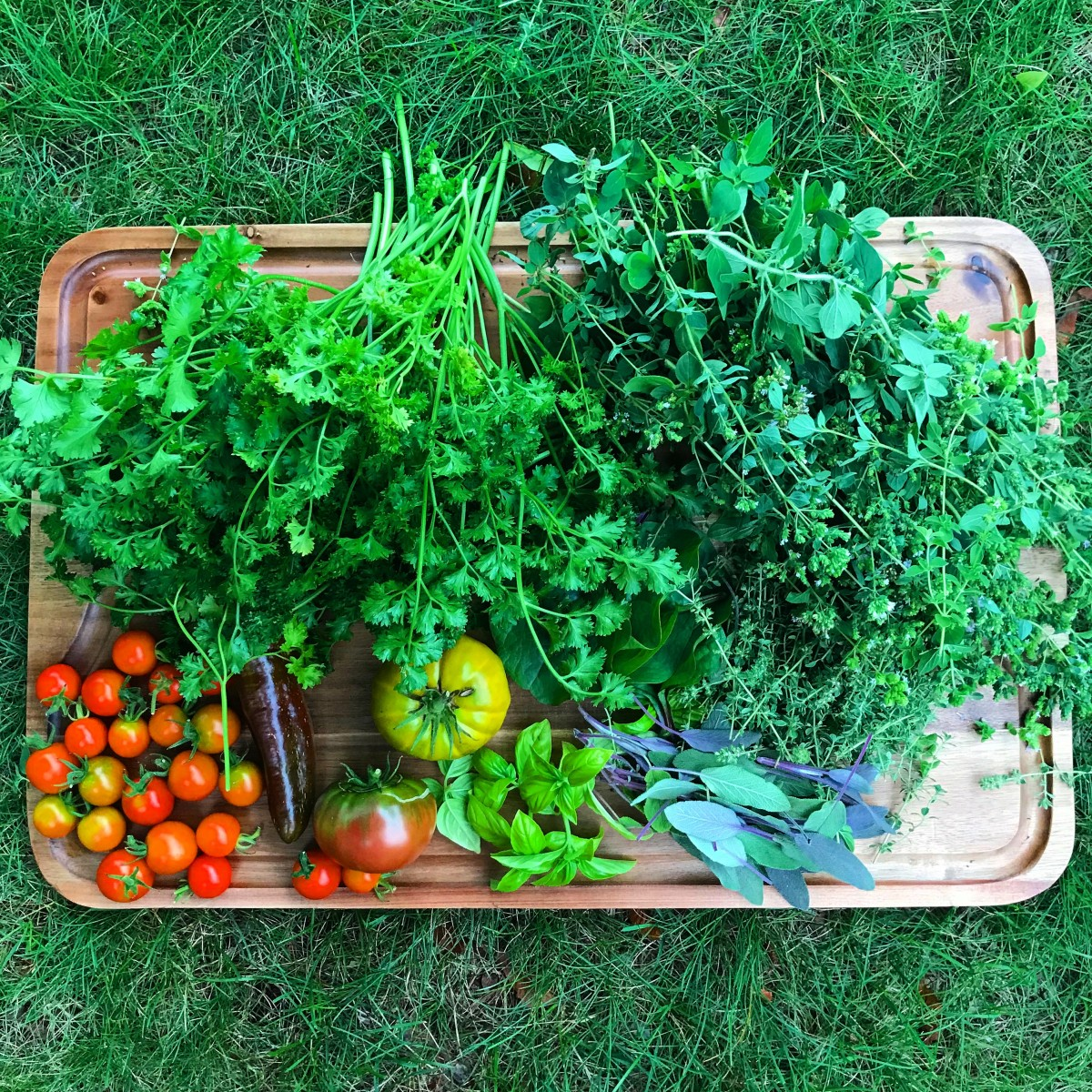 An early August harvest of fresh herbs with a couple tomatoes.