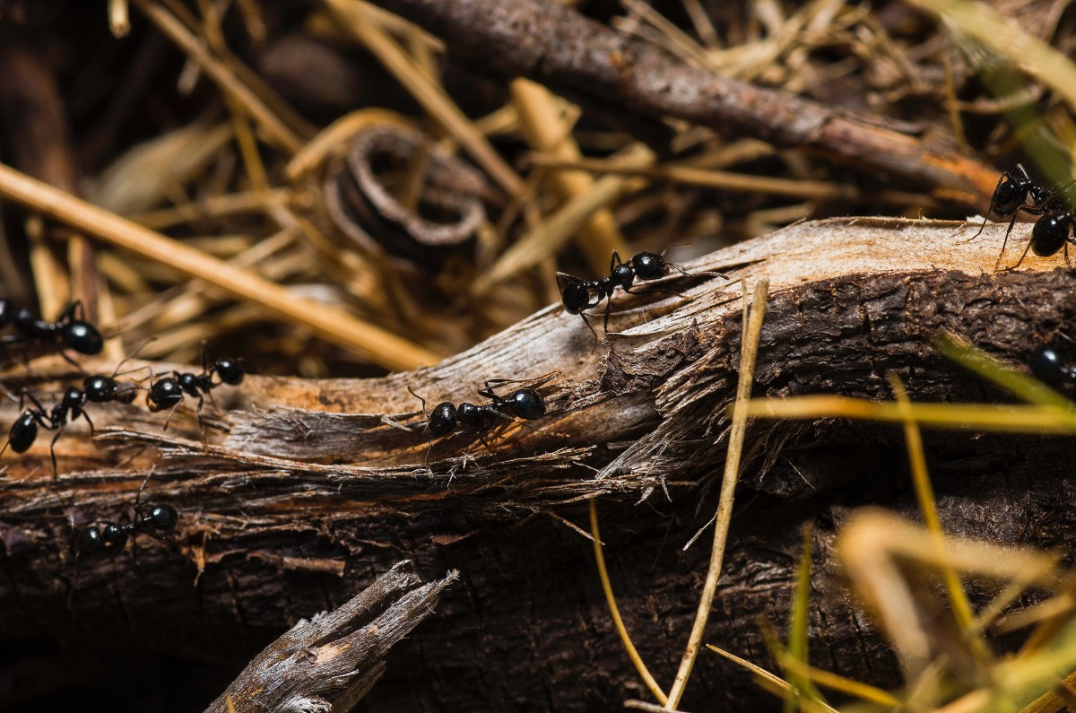 Three ingenious ways to effectively eliminate ants from your home.