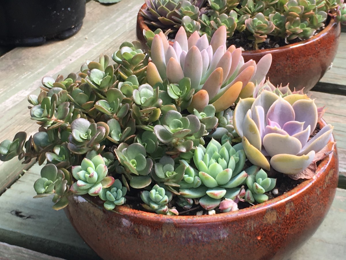 This succulent garden has a variety of colors.
