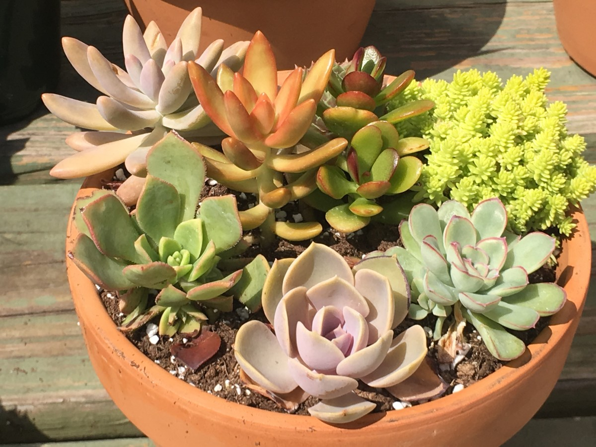 Feel free to crowd a variety of succulents into the same pot.