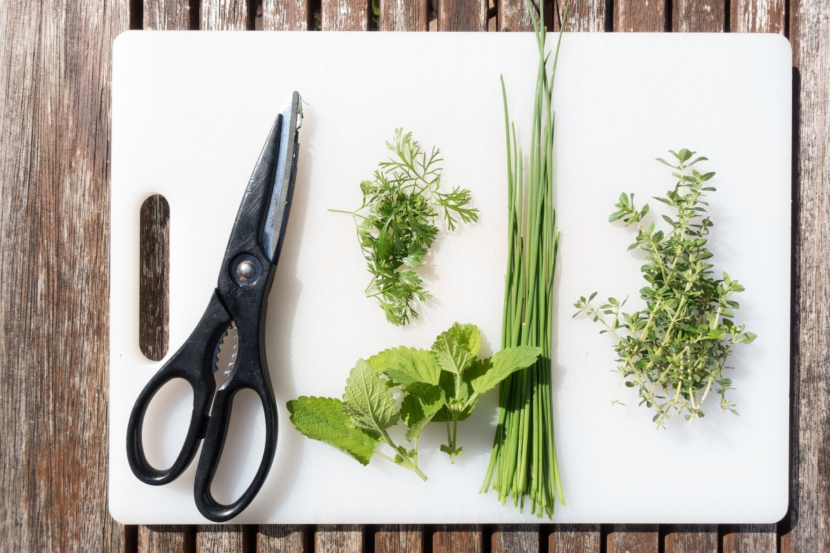 How to Create an Herb Garden in Your Home