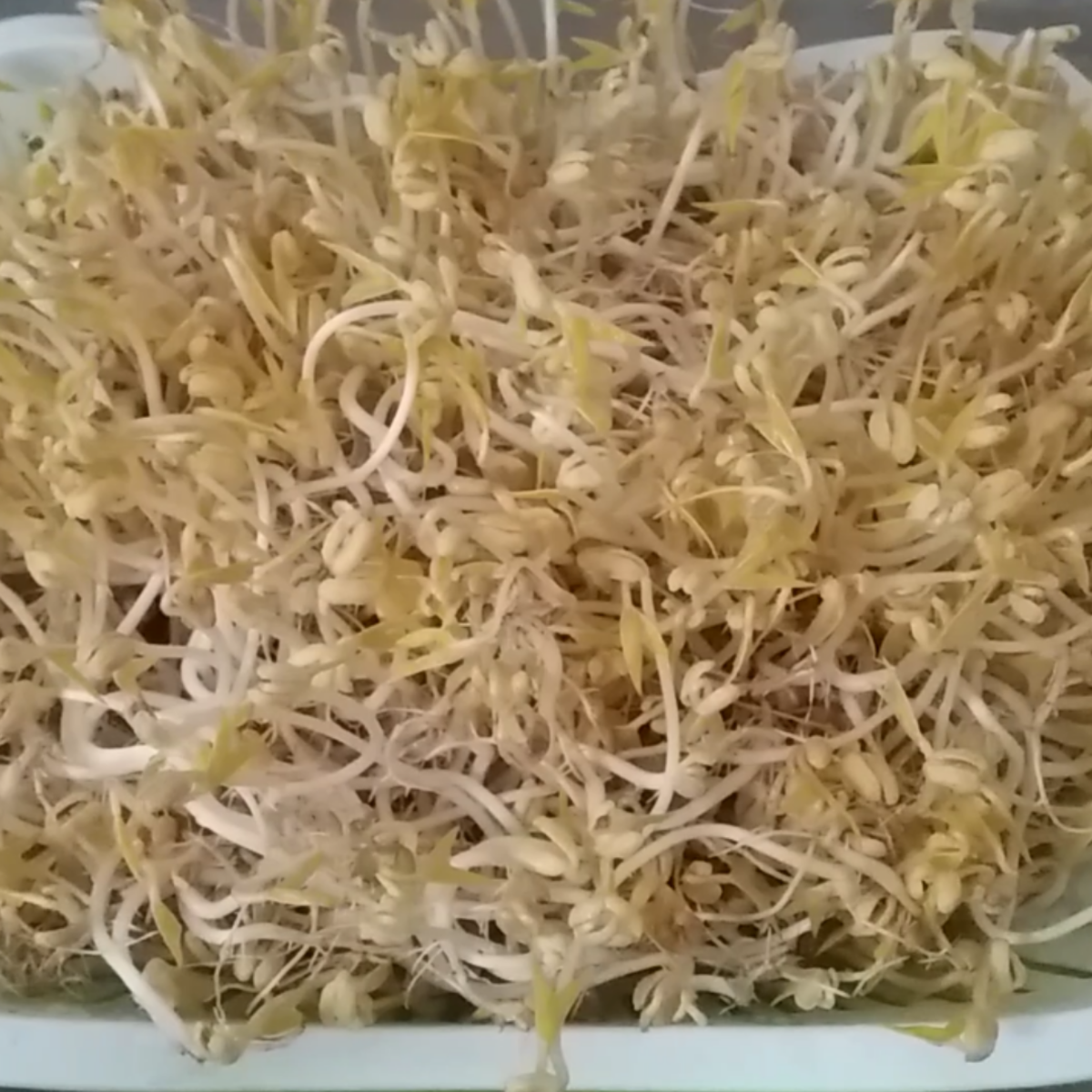 Mung bean sprouts.