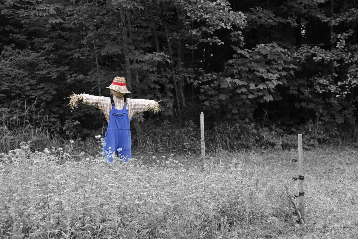Scarecrows are great for keeping critters out of your garden, or just for decorating for the season.
