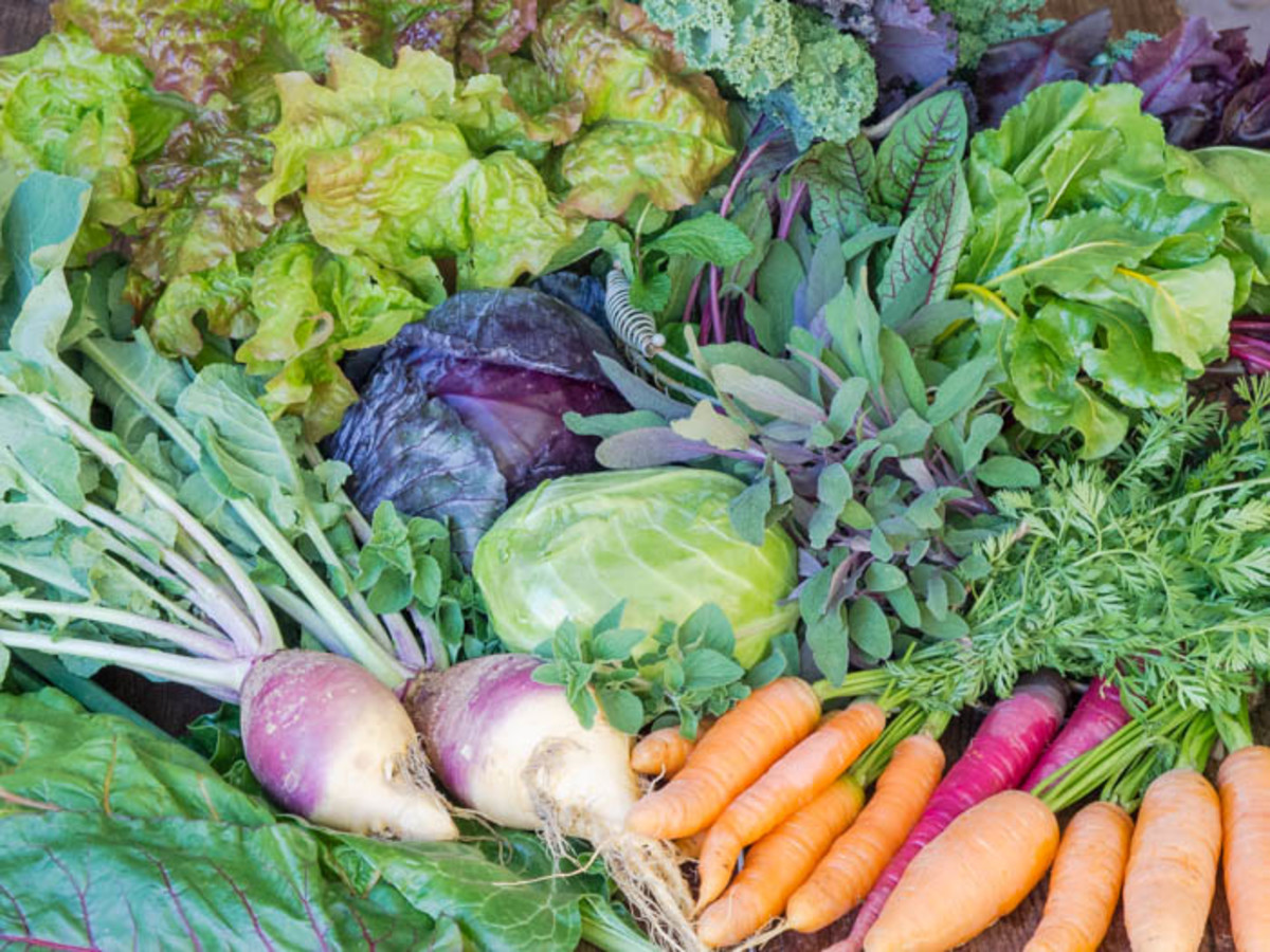 8 Best and Easiest Fall Vegetables to Plant Now
