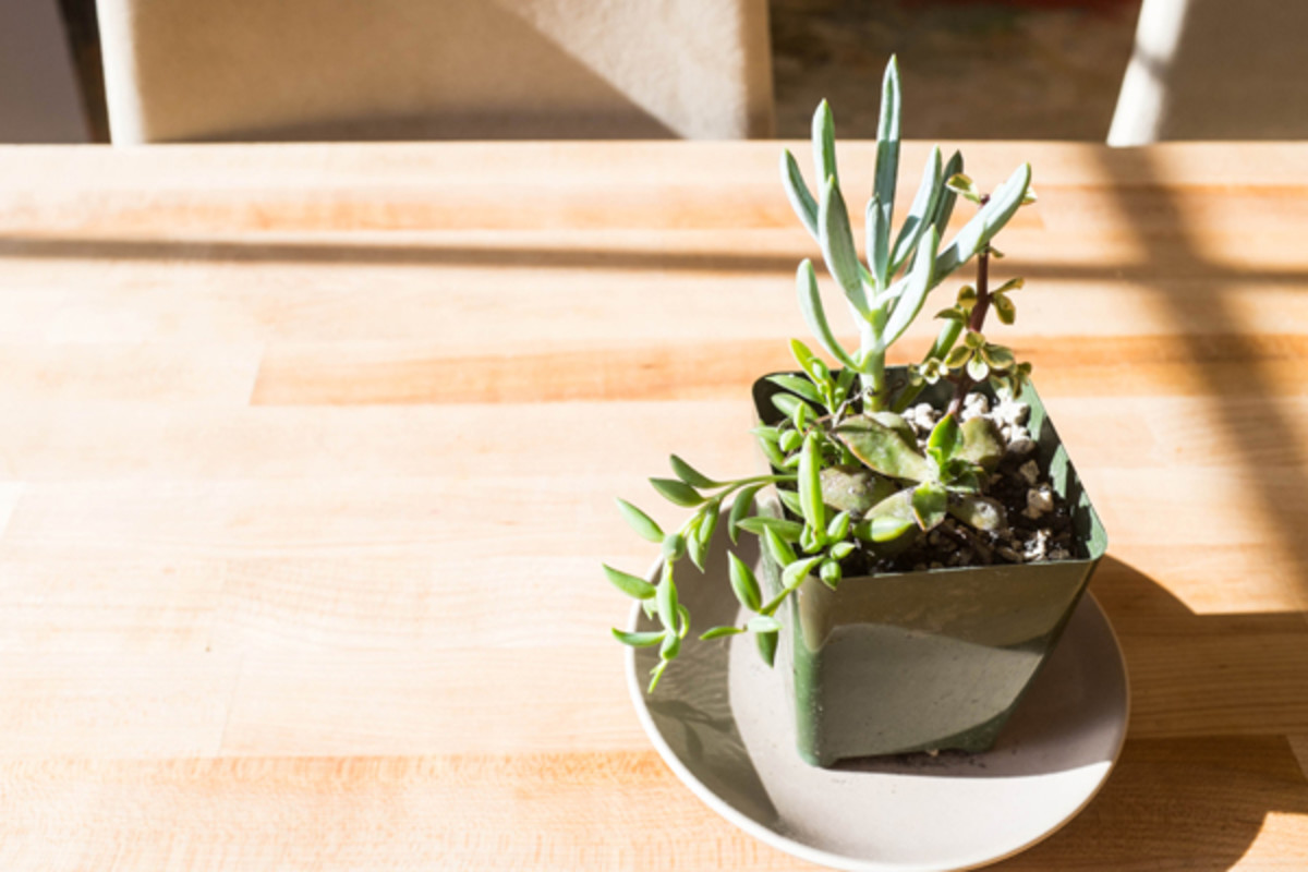How To Care For Succulents During The Winter Dengarden Home And Garden
