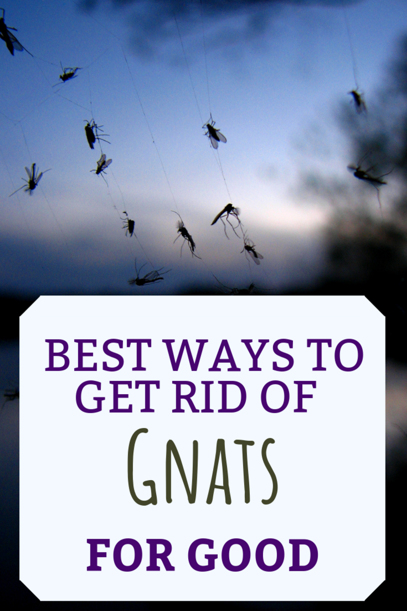 What Causes Gnats and How to Get Rid of Them