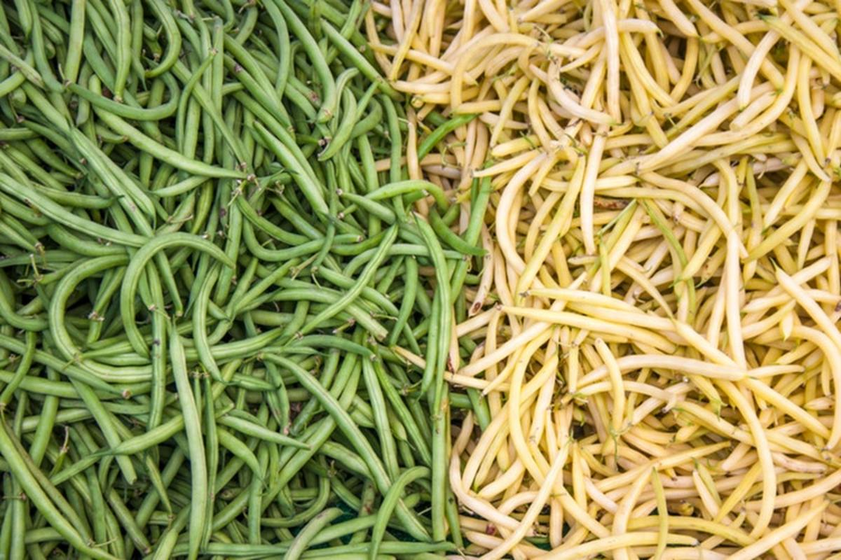 Will you choose to plant bush or pole variety beans? Bush beans may require a two-foot stake for support, while pole beans will need an eight or nine-foot pole.
