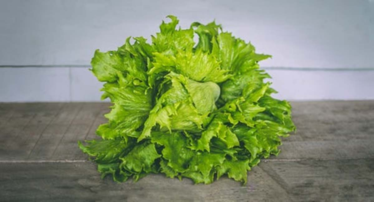 Don't forget to fertilize your lettuce with a nitrogen-rich fertilizer for a high-quality harvest.