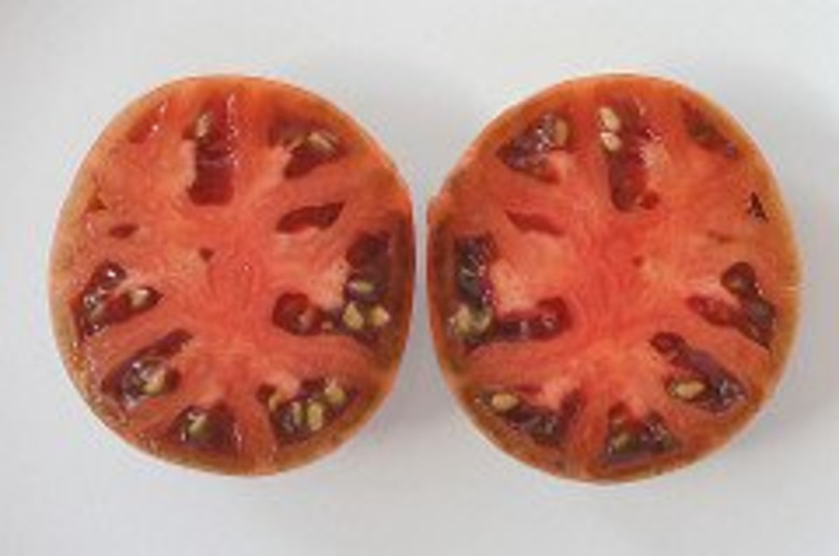 This is how you chop your tomato prior to getting the pulp out for seed separation.