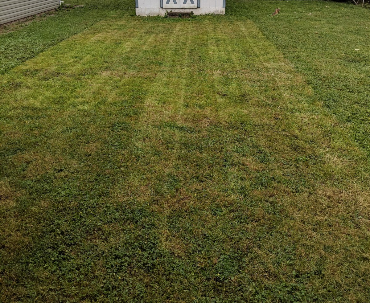 Cut grass low  with lawn mower before dethatching.