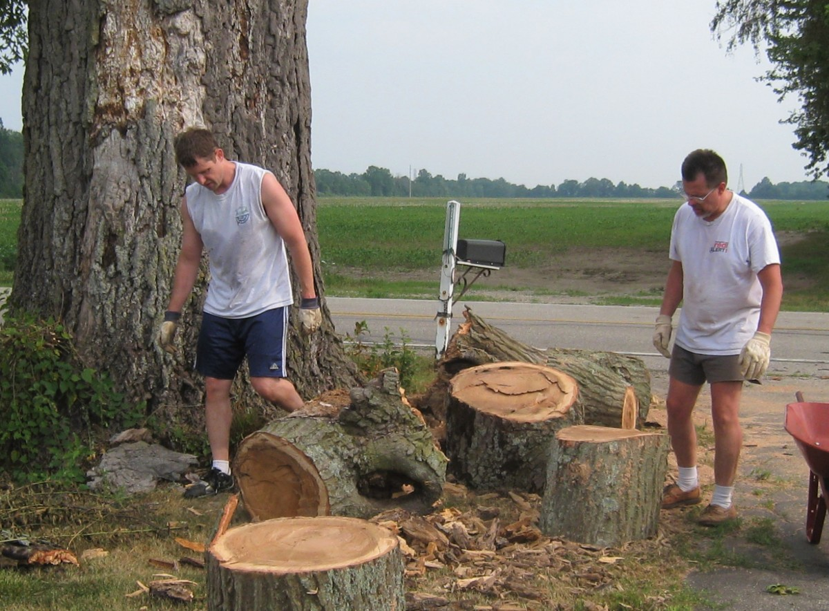 My husband (right) and his brother -- cleaning up one of the tree-sized limbs that fell from our 150-year-old (plus) oak tree.