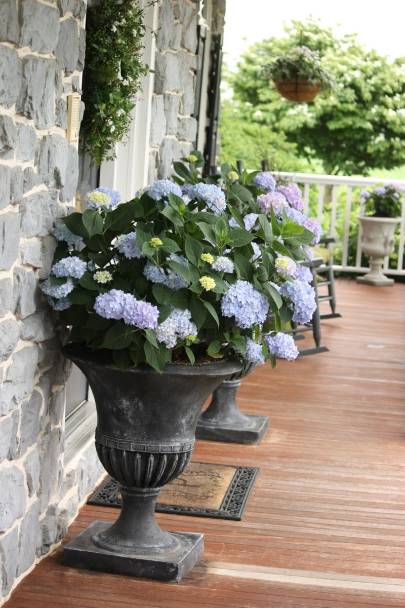 Containers brimming with gorgeous plants are perfect for flanking the front door.