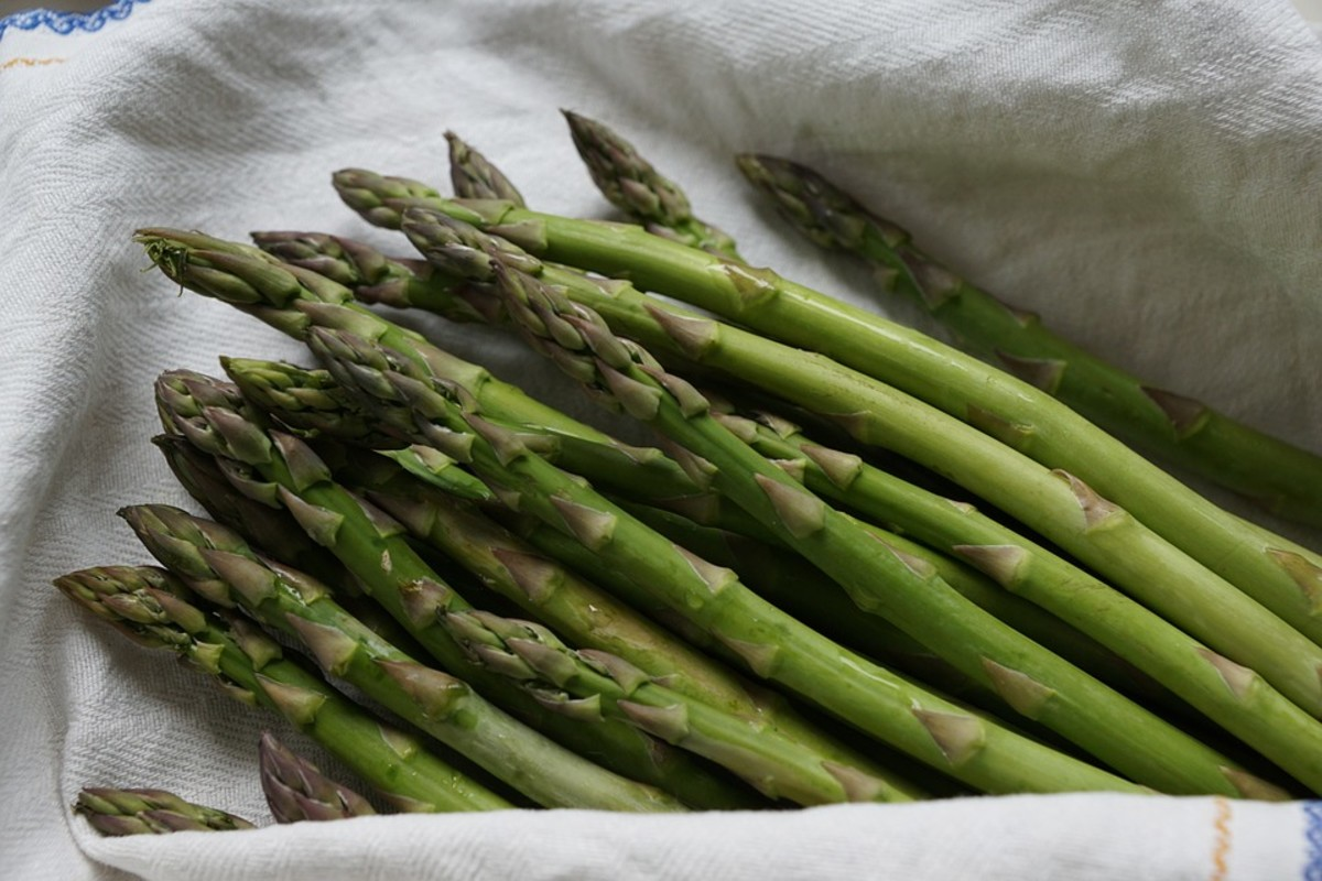 How to Grow Asparagus, a Perennial Vegetable