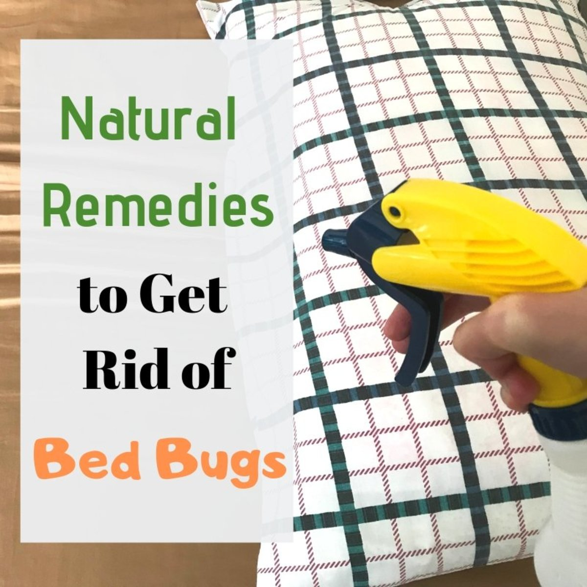 12 Home Remedies for Bed Bugs