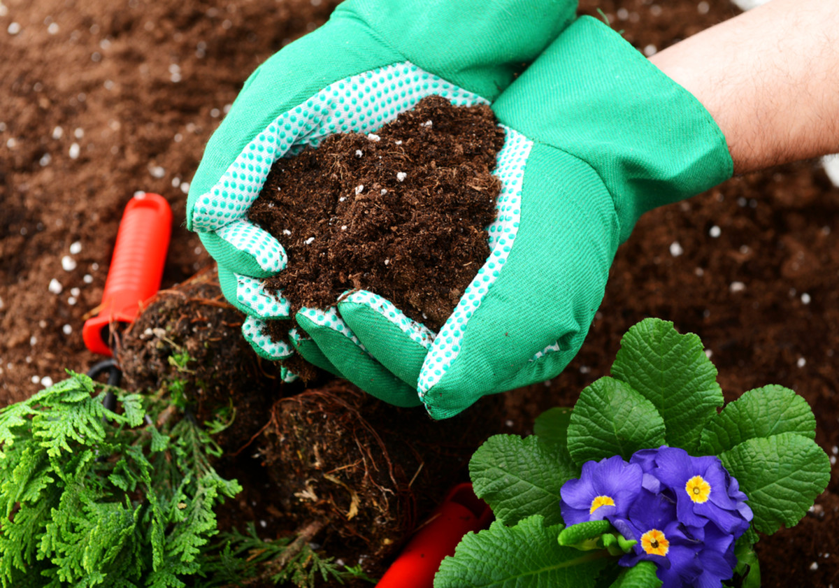 Loam is dark soil that has an earthy (almost sweet) fragrance. If you squeeze a handful together in your hand, it will clump together, but crumble easily when sifted through your fingers.