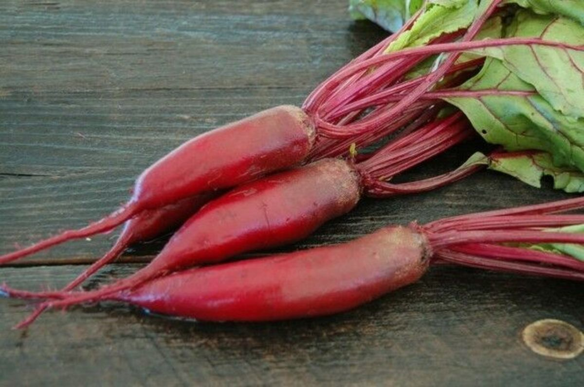 """Cylindra formanova beets provide more bang for your buck, or at least more slices -  3 to 4 times more uniform slices than round beets. This beet's sweet, dark red roots are 8"""" long."""