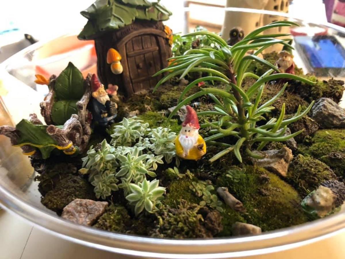 How to Create Your Own Terrarium