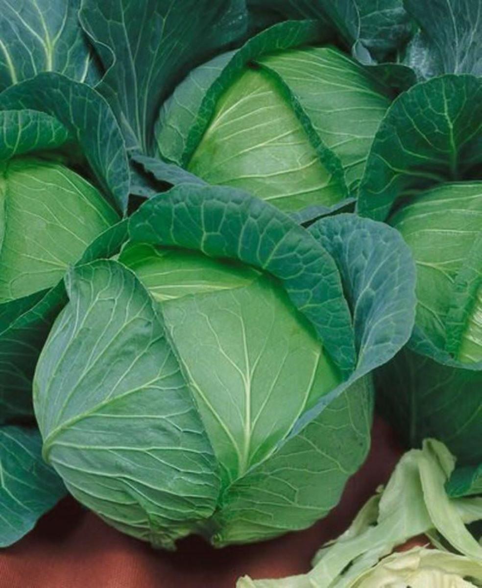 Danish Ballhead cabbage is a great winter cabbage to grow from seed. It produces solid, round heads that can reach up to about five pounds each. Planted from seed, this vegetable is ready for harvest in about 100 days.