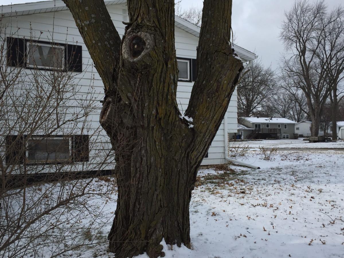 Removing Tree Limbs