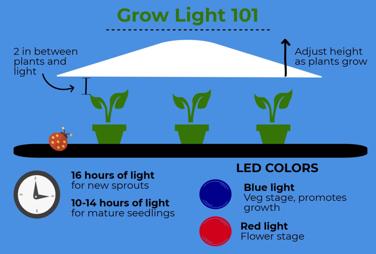 Using a Grow Light to Start Seeds Indoors
