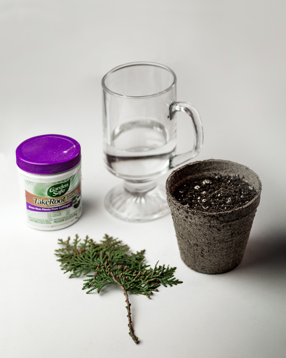 You will need a glass of water, some hormone rooting compound, your cutting and a small container filled with growing medium.  I use a commercial potting soil, but you can also use peat moss and sand, or other mediums.