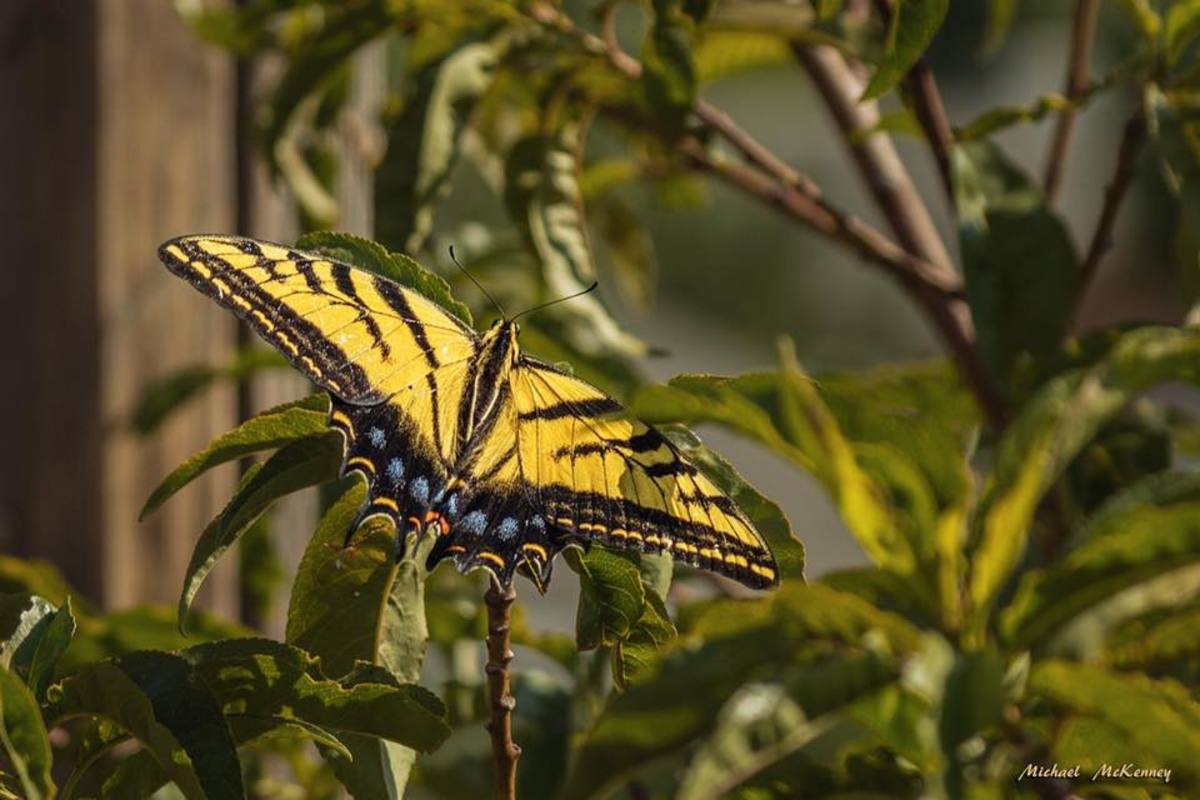 How to Create a Garden Mecca for Butterflies