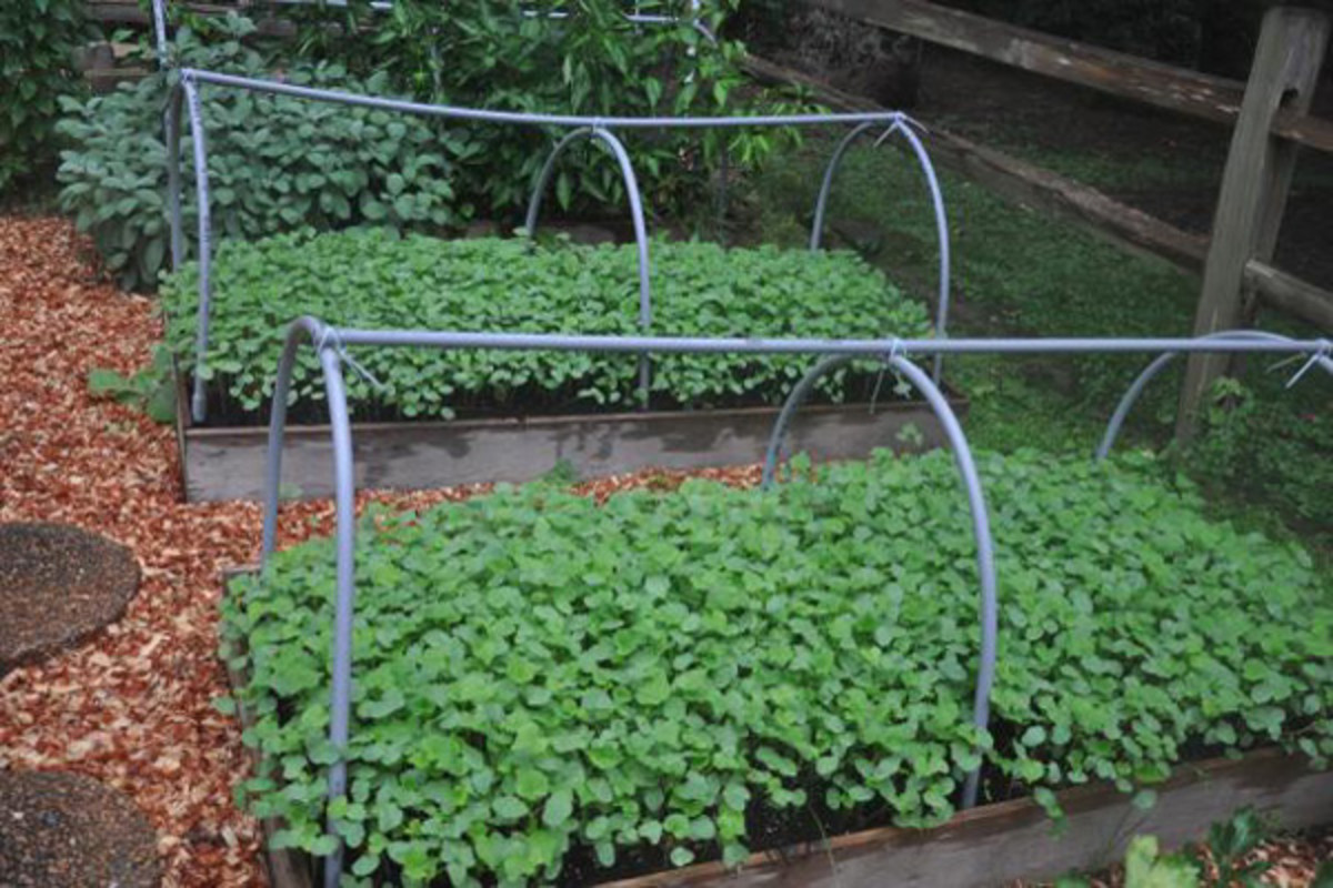 Planting cover crops will help provide depleted nutrients after several crop harvests.