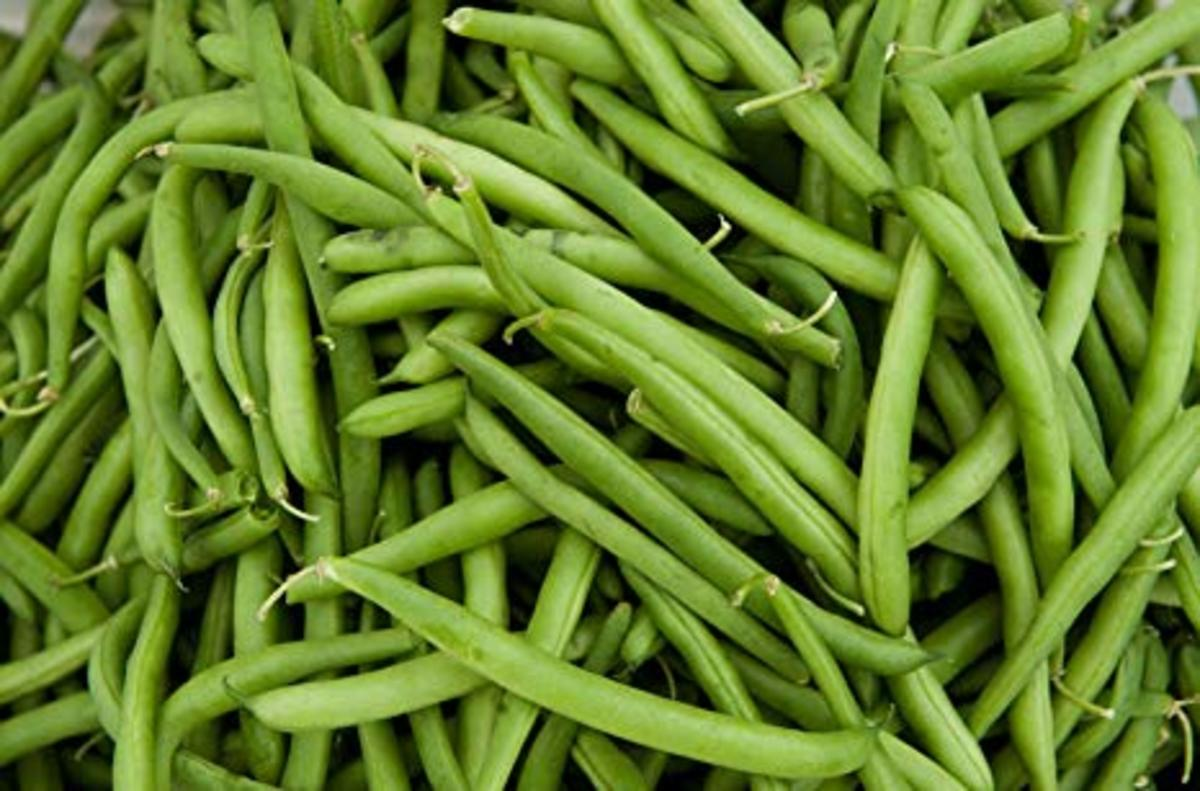 Growing Green Beans in Ohio