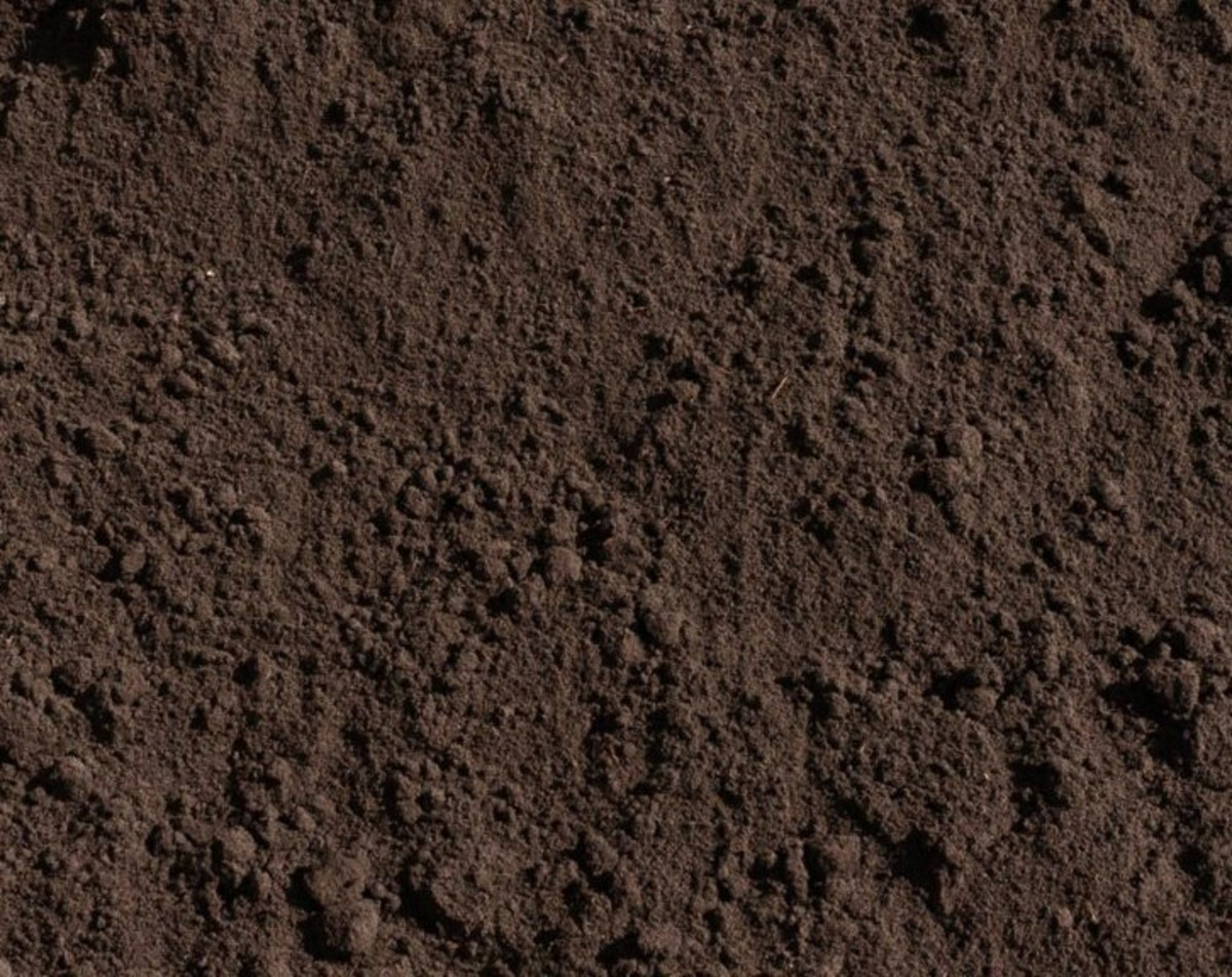 Test the soil in your Ohio garden to determine its acidity.