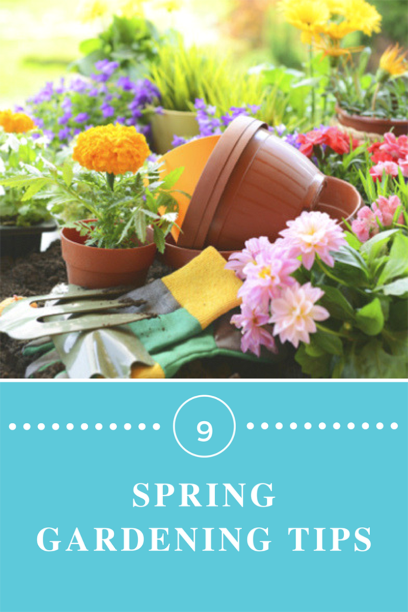 Essential Spring Prep for a Glorious Garden