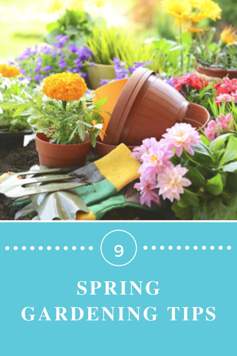 Essential Spring Prep for a Glorious Garden