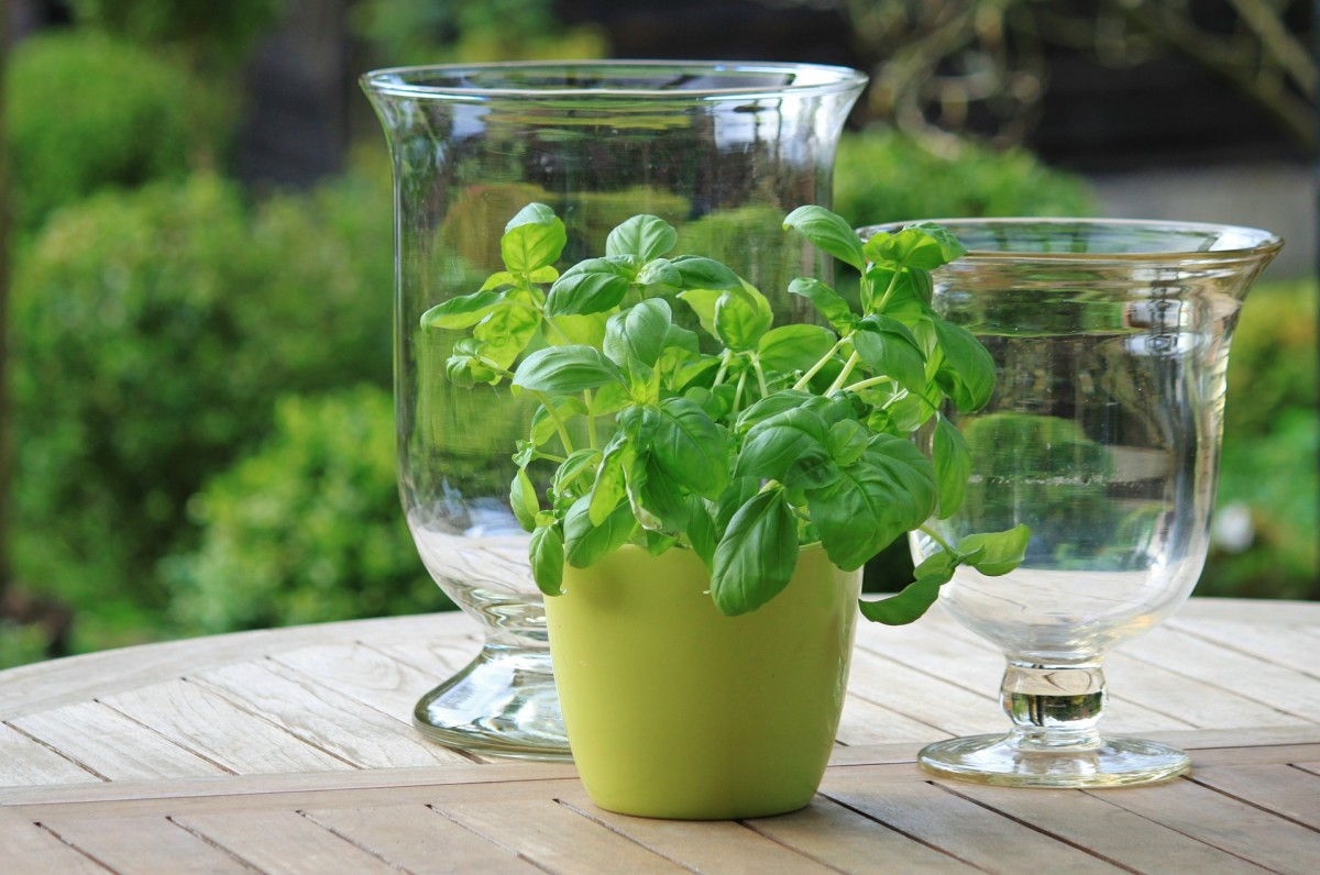 7 Best Herbs for Your Container Garden