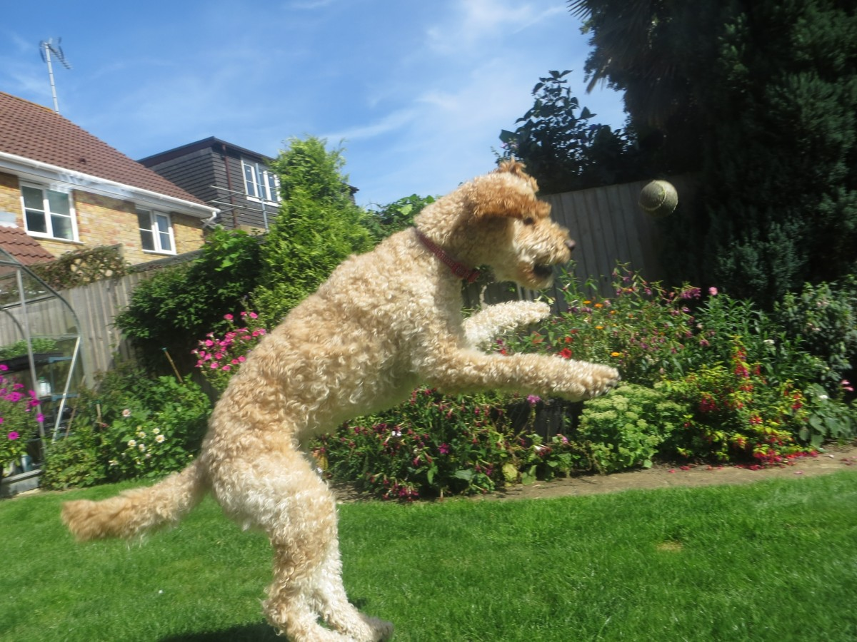 The flying Doodle