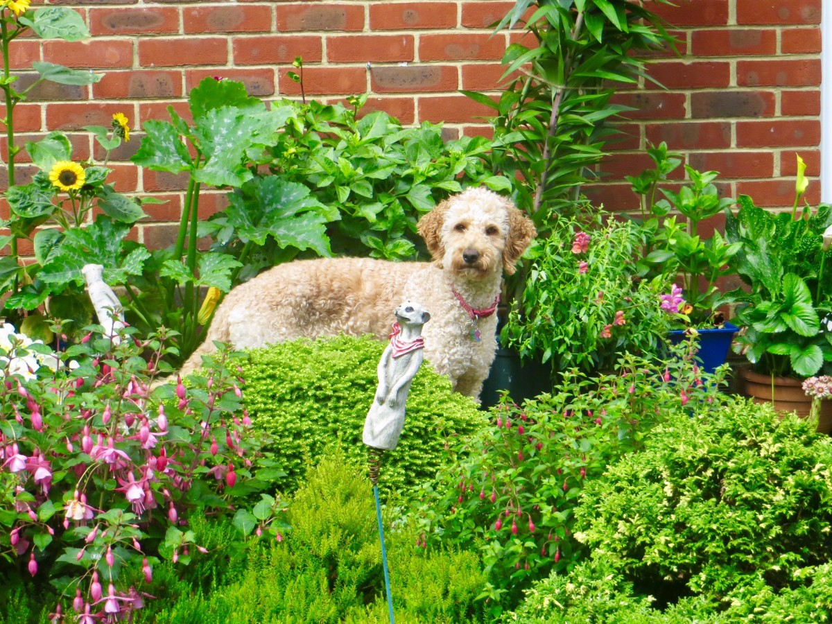 Top 5 Sturdy Garden Plants for Dog Owners