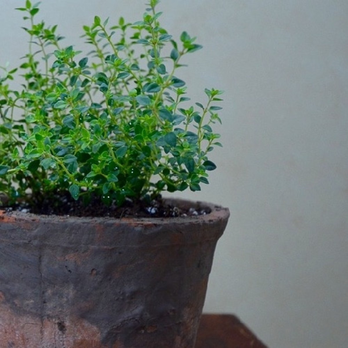 Thyme loves lots of sunlight and is delicious in meats and poultry recipes.