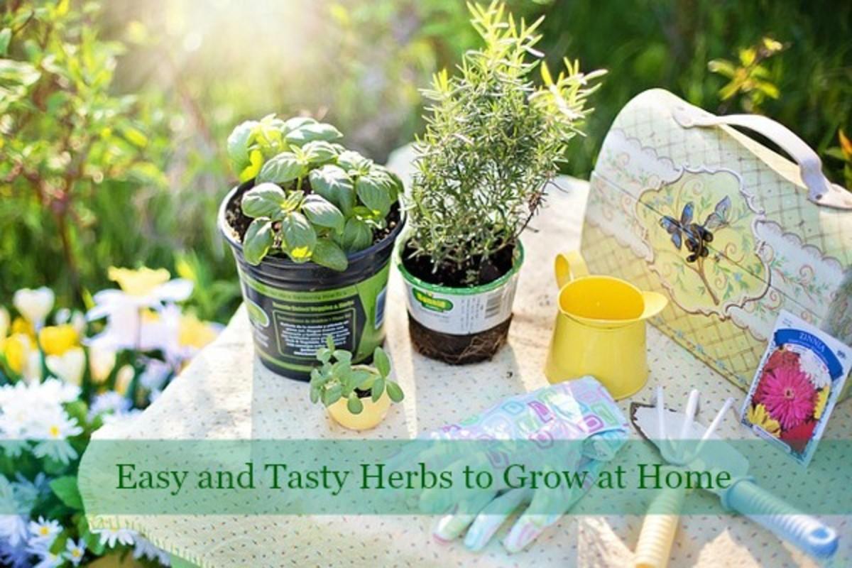 6 Easiest and Tastiest Herbs to Grow