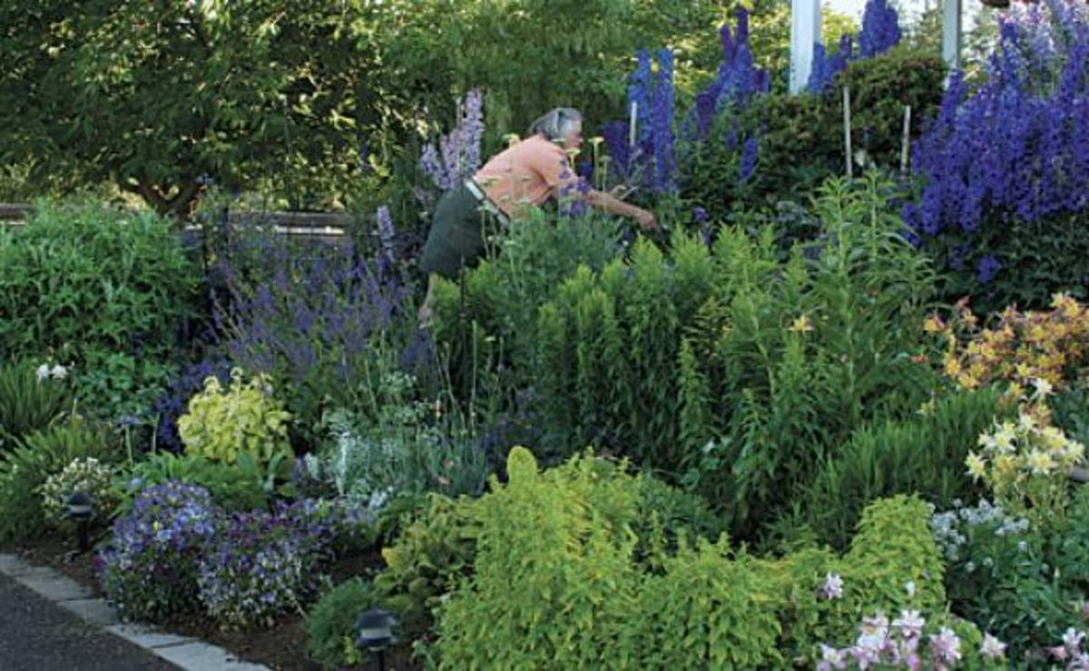 Top Flower Picks for a Summer Cutting Garden