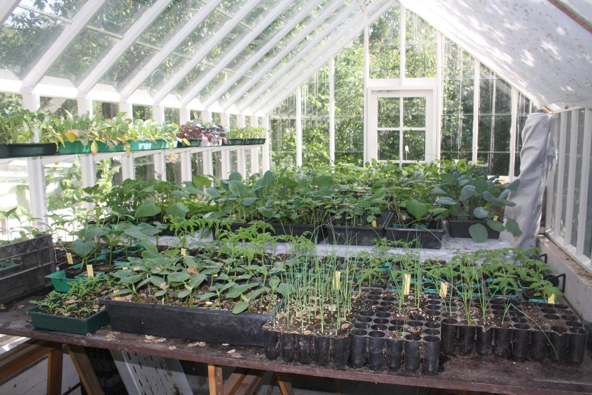 Interior view of a simple constructed greenhouse.