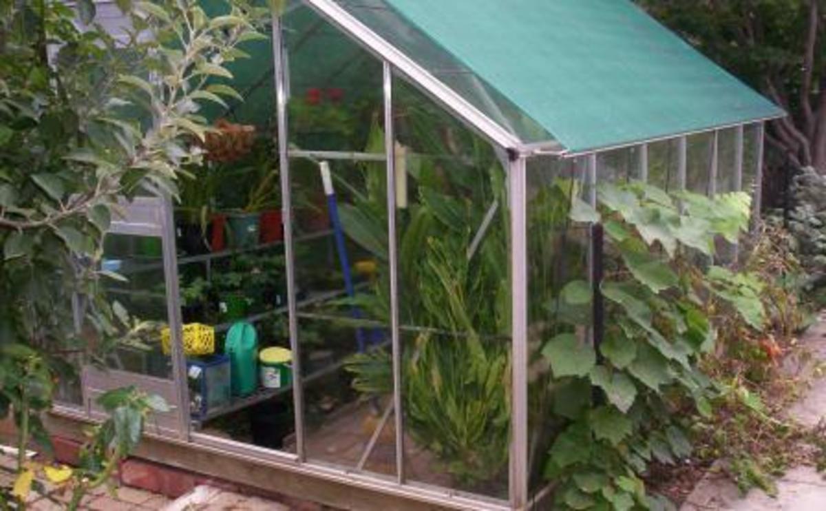A small greenhouse in a private garden of Australia.