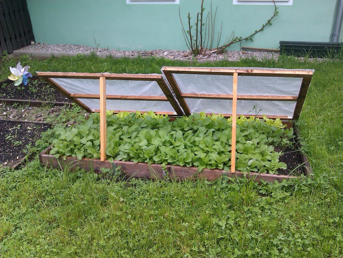 A small cold frame in a backyard.