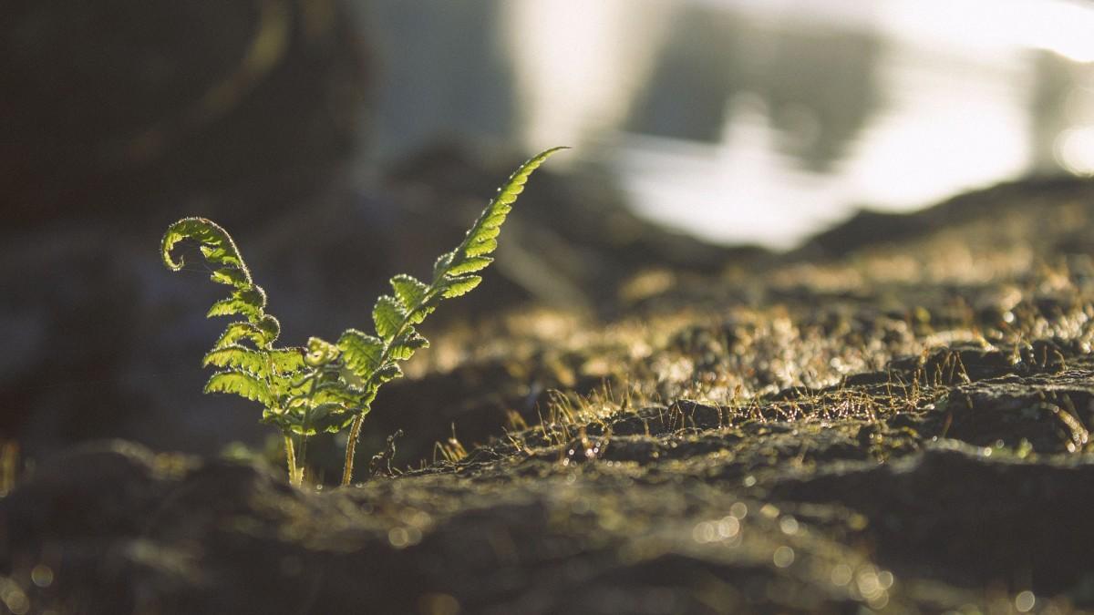 Understanding Your Garden's Soil